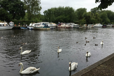 Thorpe St Andrew - River and Swans