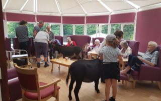 Residents meeting the Miniature Donkeys